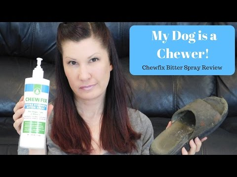 how-do-i-get-my-dog-to-stop-chewing?