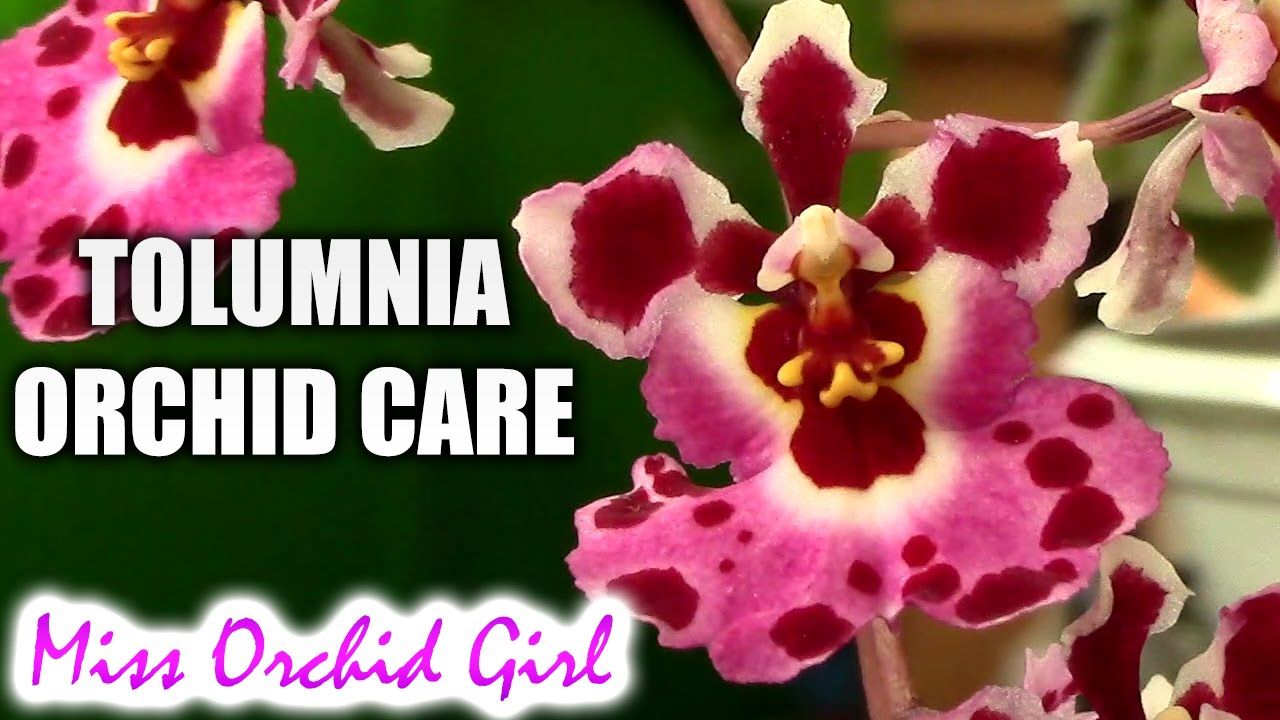 Orchid Care And Rich Beautiful Flowers At Home Admiring moreover Orchids moreover White Orchids On A Branch additionally Watch furthermore Planted Terrariums. on orchids and their care