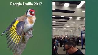 REGGIO EMILIA Feria Show Ornitológico 2017