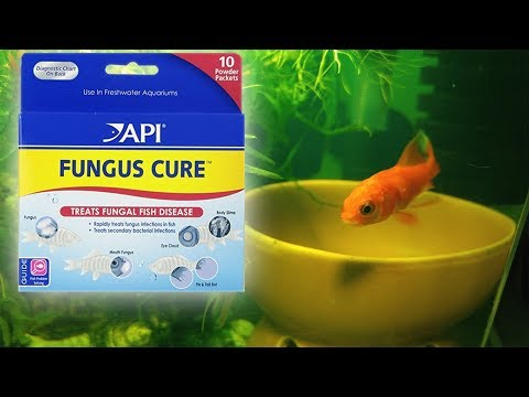 API Fungus Cure Comet Goldfish WORKS!