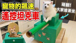 在家打造,地獄寵物坦克車!『征服世界不是夢!』😊😊😊