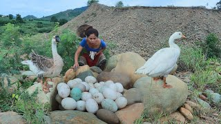 Women with rabbits found goose egg for cook at river - Eating delicious