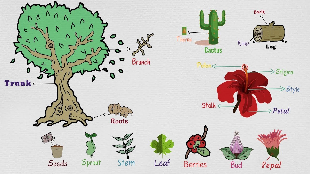 Parts of A Plant: Useful Plant Parts, Flower Parts, Tree ...