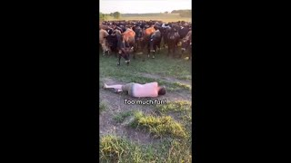 Sleeping Guy Suddenly Moves While Surrounded With Curious Cows