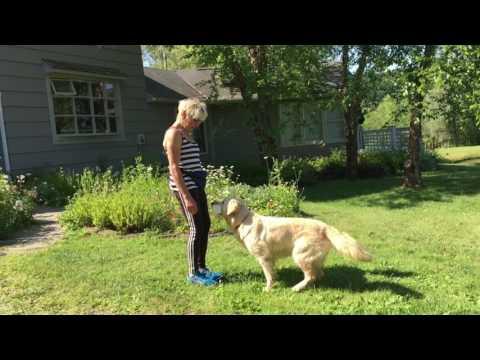 AKC TRICK DOG - INTERMEDIATE