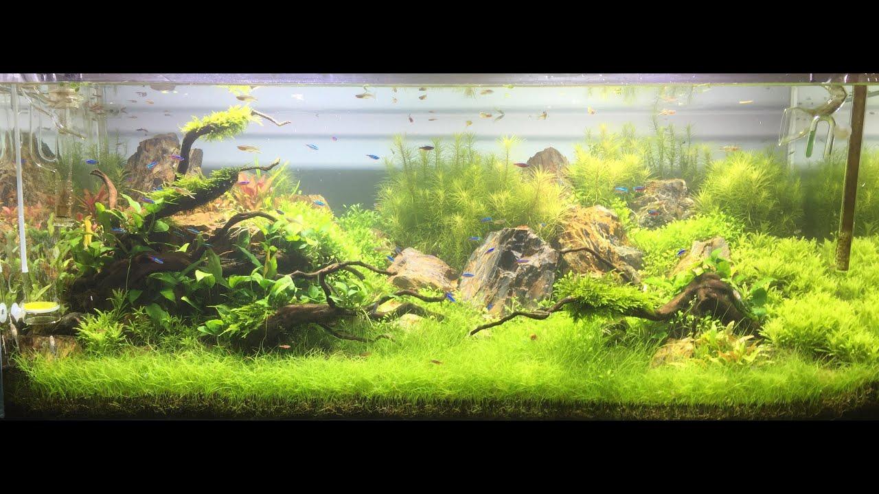 Montaje acuario plantado de 300 litros youtube - Montaje de acuarios ...