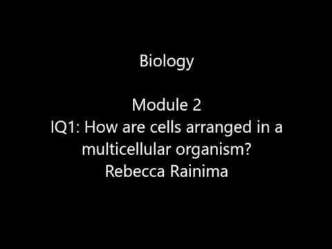 Bio 2 Multi cellular Organisms