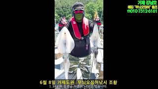 강남호 무늬오징어 6월 8일 거제도 에깅낚시 조황