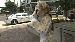 Furries Return & Save A Restaurant - Anthrocon 2013