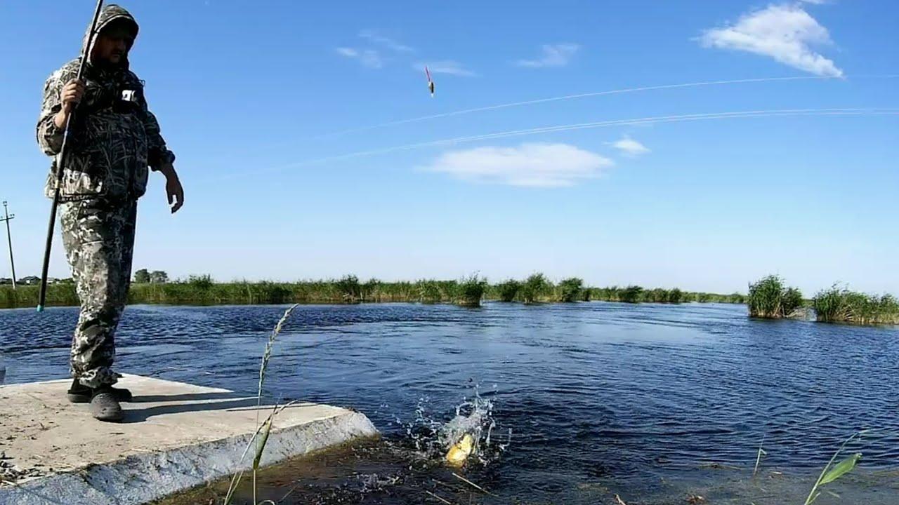 8 кг на 5 червей за 3 часа. Рыбалка на поплавок. КАРАСЬ Видео 2020. Ловля крупного карася летом!
