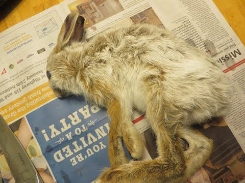 How To Skin And Gut A Rabbit While Preserving The Fur (4x Speed)