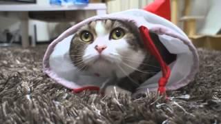 Кот-оперный певец.