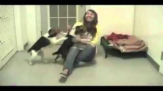 Beagle Paws Psa