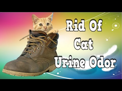 rid of cat urine odor how to get cat pee odor out of carpet get rid of cat pee odor remove. Black Bedroom Furniture Sets. Home Design Ideas