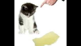 How to Remove Cat Urine From Carpet| Pet urine odor remover
