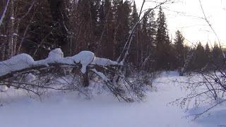 Девственная тайга в мороз - 55 одиночный поход охота рыбалка сибирь обморожение выживание