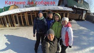 Хаски / Катание на собаках / Питомник Эльбрус в Екатеринбурге