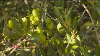 Les saveurs de l'huile d'olive - Les carnets de Julie