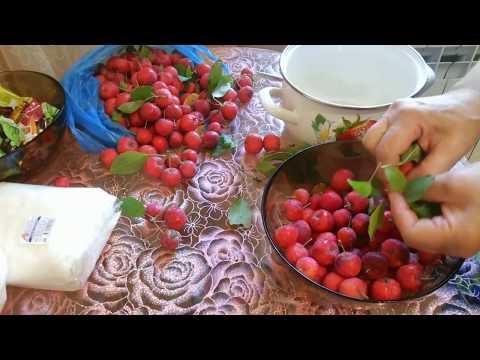 Райские яблочки или Варенье из Китайки и сама Яблоня!!!