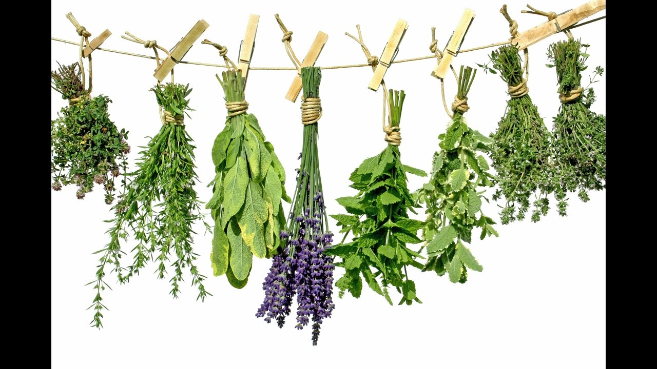 Where to buy herbs - ital is vital