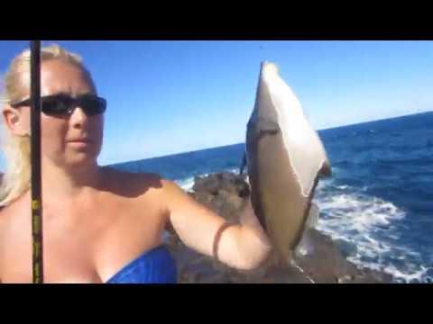Hawaiian Trigger Fish # 1