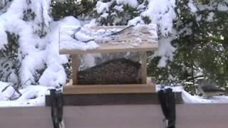 Snowbirds At Our Garden Bird Feeder
