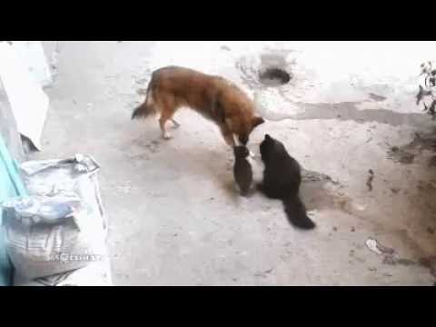 Momma cat brings kids to meet extended family