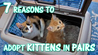 7 Reasons to Adopt Kittens in Pairs