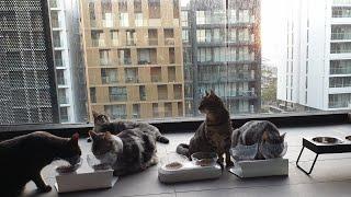 [6명의 고양이 브이로그. 힐링 영상] 시드니의 초여름…