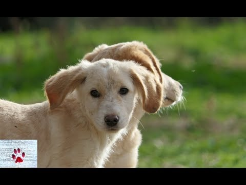 10 amazing facts about dogs (+1)