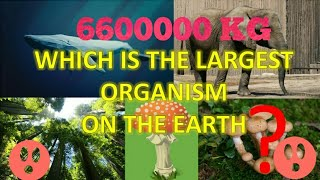 Which is the largest living organism on the earth | 6.6 million or 6600000 KG