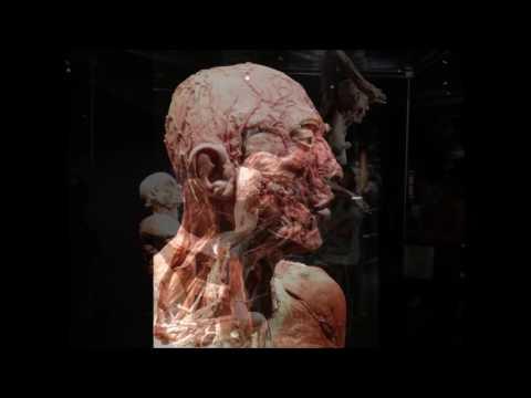 Gunther von hagens exhibition holland