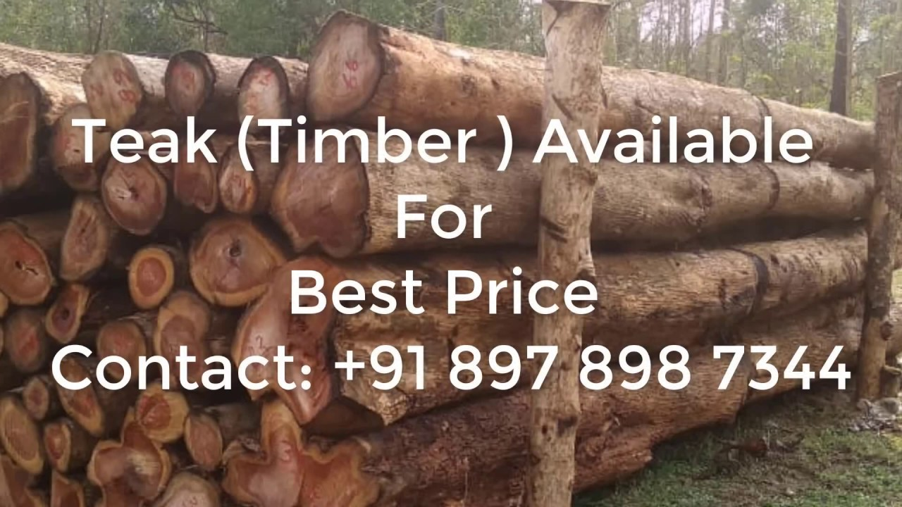 Timber Teak Wood Best Price Forest Permit Approved Youtube