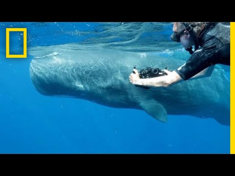 What Sperm Whales Can Teach Us About Humanity | National Geographic