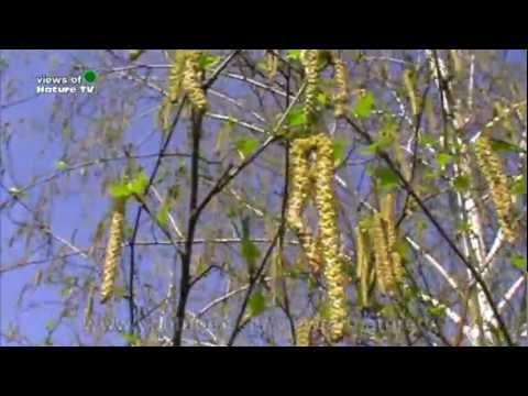 Купить дрова в Ногинске и Ногинском районе: березовые