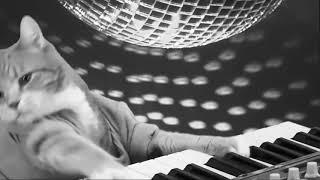 Видео в память Коту Пианисту