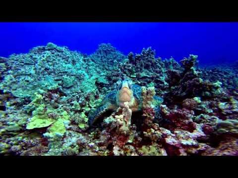 Saipan Dive