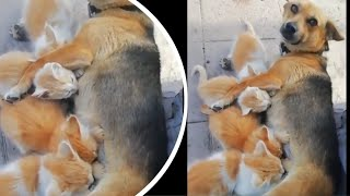 😇 Awesome Funny Animals' Life Videos 🐶- Animal Videos Compilation 🐨- Try Not To Laugh | 2020 - #5