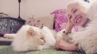 Бирманская кошка: Карл Лагерфельд: Святая святых