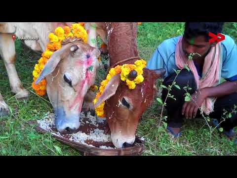 Sohrai, the harvest festival of Jharkhand | Basanti reports from Jharkhand for Video Volunteers.