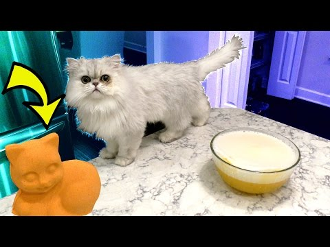 PRANKING OUR CAT WITH A CAT BATH BOMB!!!