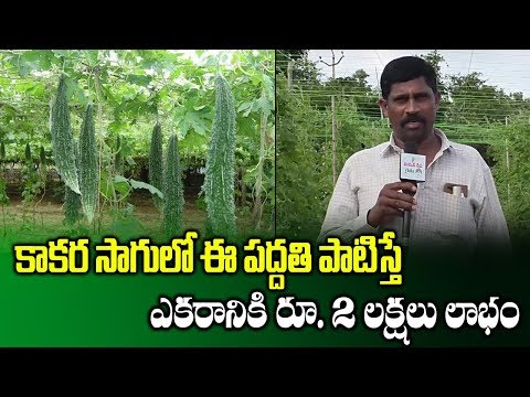 Huge Profit With Bitter Gourd Cultivation Through Pendal System | Profitable Farming | SumanTV Rythu