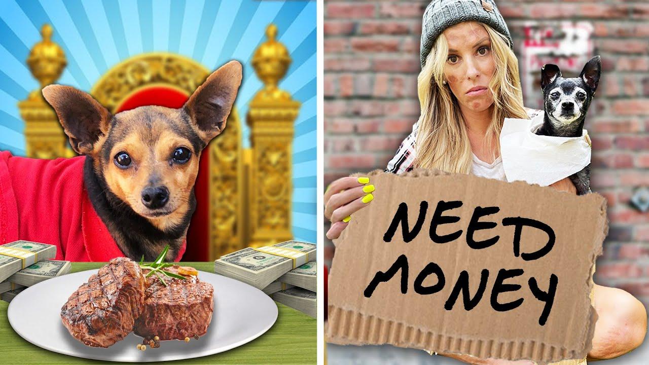 RICH DOG VS BROKE DOG - PawZam Dogs