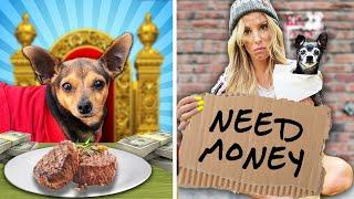 RICH DOG VS BROKE DOG  PawZam Dogs