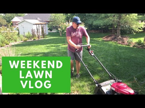 Repeat Simple Lawn Solutions & Pro Plugger // Mail Time! by