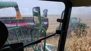 Harvesting Corn in the Snow is Problematic