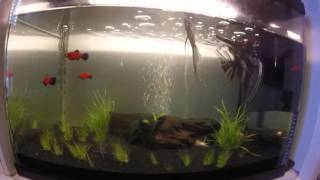 Aqueon Floramax 15 watt light for my 28 gallon tank!