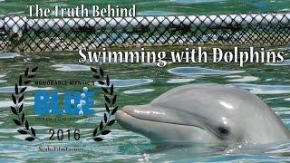видео Плавание  с дельфинами