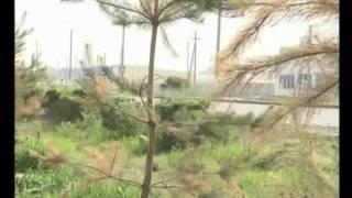 Выживут ли посаженные сосны?(Этим вопросом озадачены жители нашего города. Ведь совсем недавно высаженные хвойные деревья начали желте..., 2014-05-14T14:11:45.000Z)