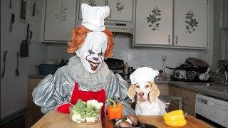 Pennywise & Dog Cook Dinner Together: Funny Dog Maymo